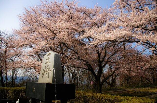 第62回天童桜まつり人間将棋♪