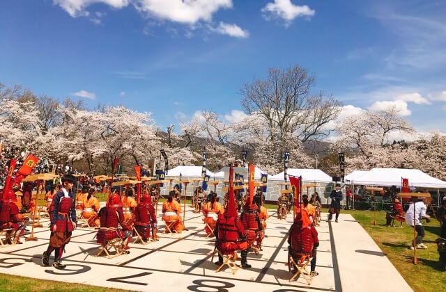 天童の春の風物詩「桜まつり~人間将棋~」開催中!