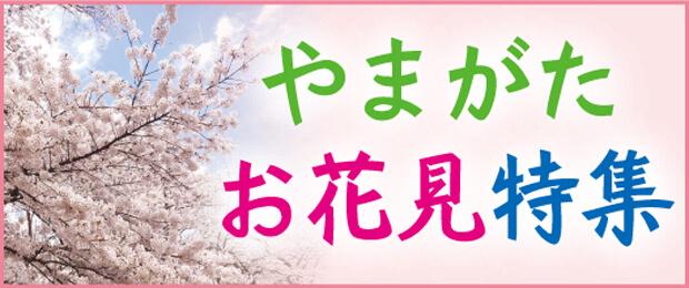 山形桜お花見特集