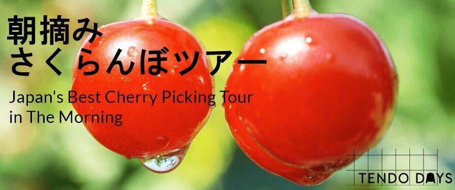 天童朝摘みさくらんぼ狩りツアー2018!6/23~7/9の17days限定催行!