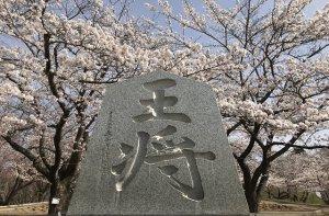 舞鶴山山頂も綺麗に咲き揃いました
