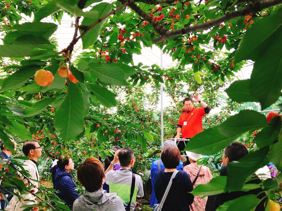 王将果樹園スタッフによる説明