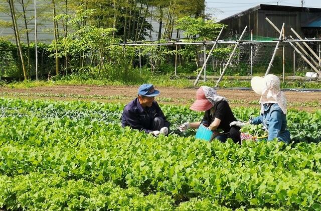 【こだわり無農薬野菜収穫体験】大地の恵みを肌で感じて、身体で味わう!その時の旬に出逢う旅!!